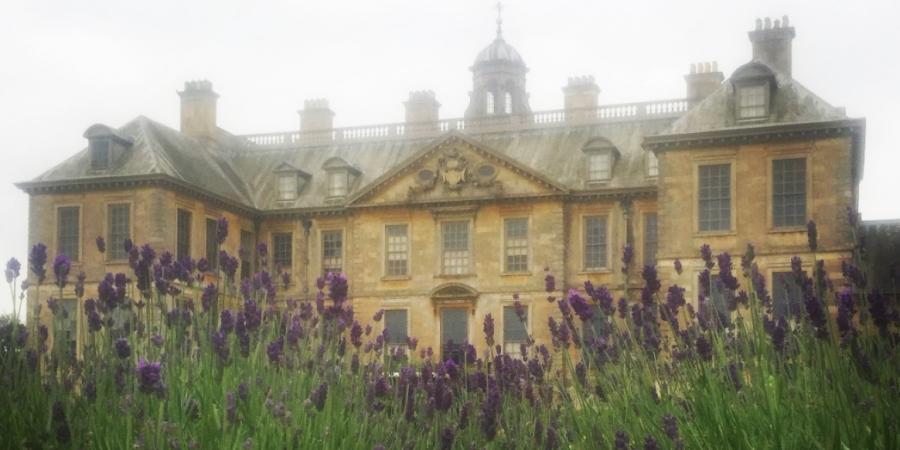 Lavender at Belton House
